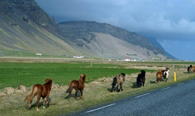 Iceland felt so raw and free. These horses running alongside the road captured that essences quite well. Somewhere between (E) and (F), just before...