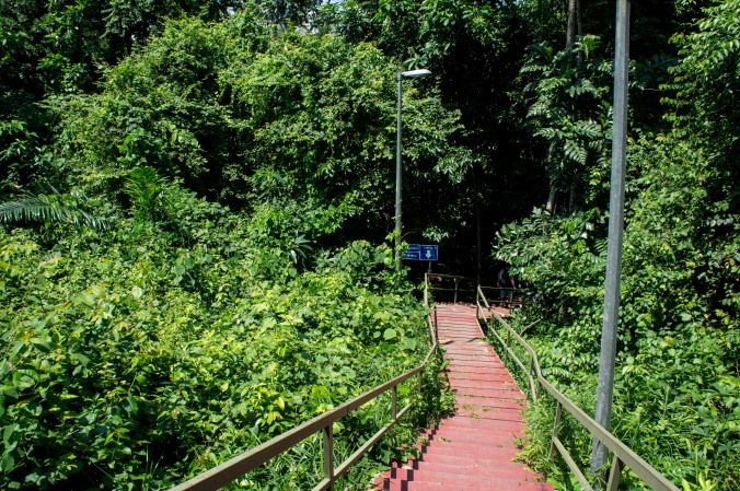 Exiting the observation platform, walk down the road a few feet and you'll see the stairs heading back down the hill.