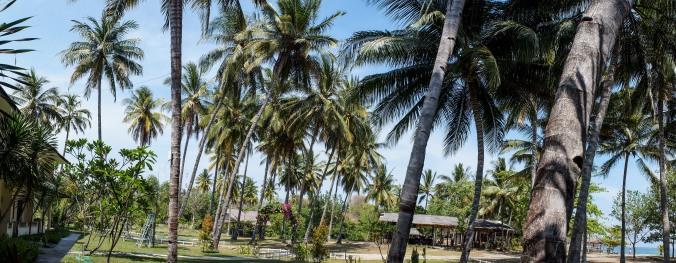 Palm trees at Medana Bay Marina Grounds