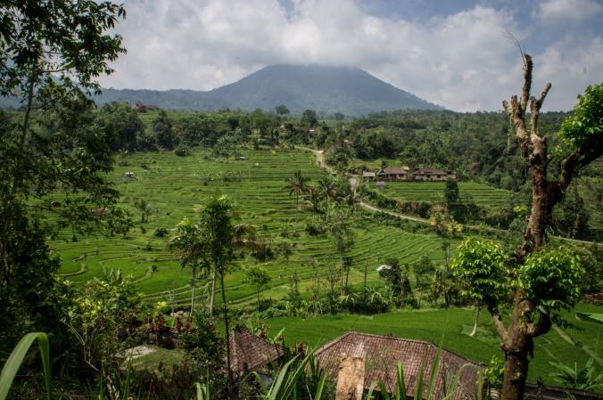 Jatiluwih rice terraces, Bali, Indonesia