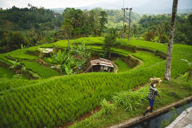A woman walks along a canal that brings water to the rice paddies at Jatiluwih, a UNESCO World Heritage Site in central Bali, Indonesia.