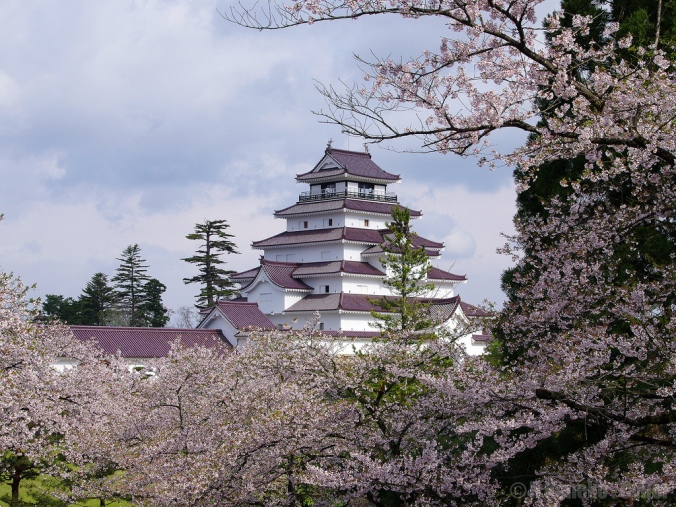 Japan-cherry-blossom-castle