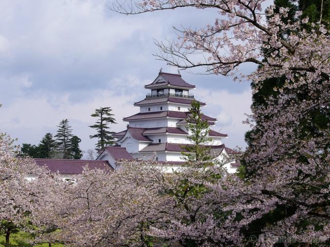 Japan-cherry-blossom-castle