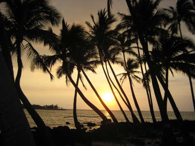 Palm trees at sunset on the Big Island, Hawaii